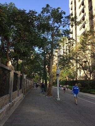 行道樹連結都市中的公園綠地