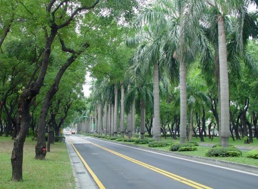 行道樹提供良好綠蔭(台北)
