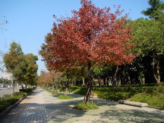 利用植栽建立都市特色(台北)
